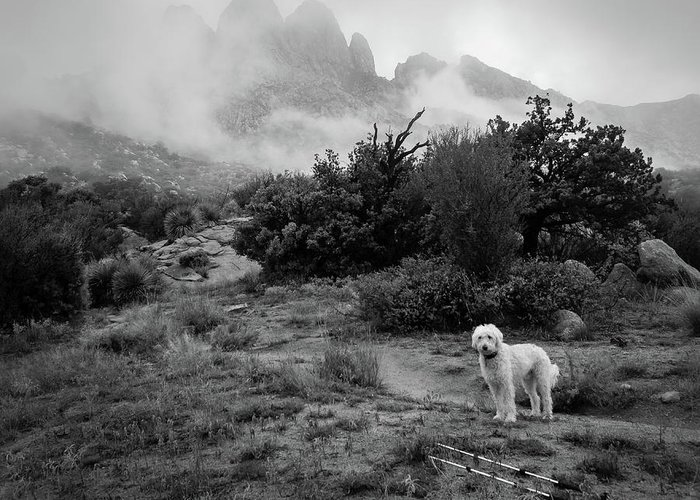 Teig Greeting Card featuring the photograph Fog In The Organ Mountains by Cary Leppert