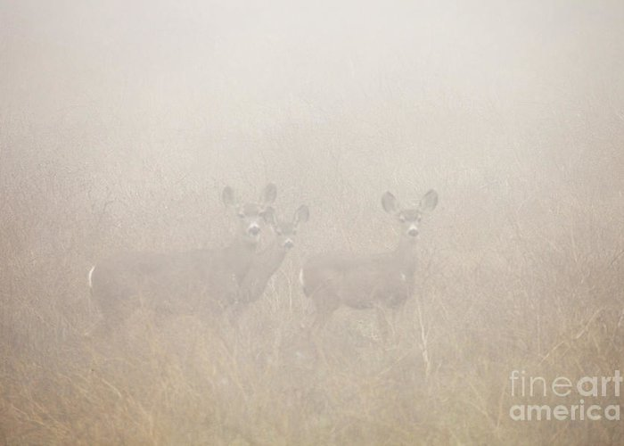 Deer Greeting Card featuring the photograph Foggy Eyes by Greg Clure