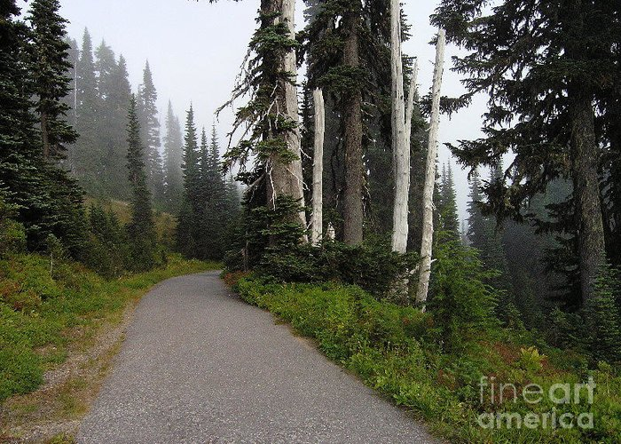 Nature Greeting Card featuring the photograph Foggy Forest by Silvie Kendall