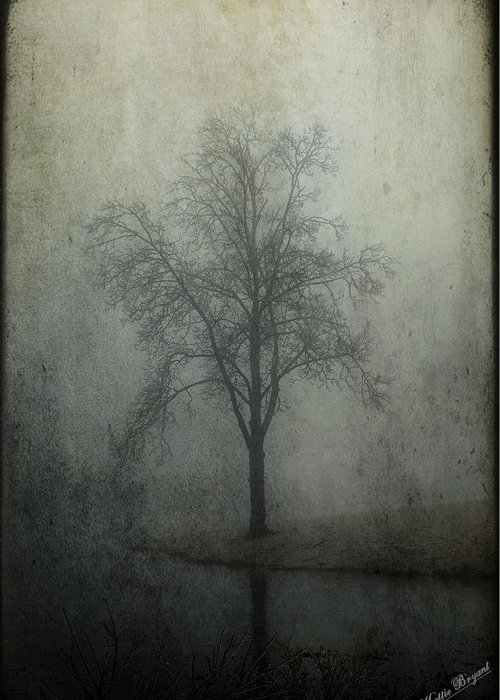 Fog Greeting Card featuring the photograph Foggy Morn by Mattie Bryant