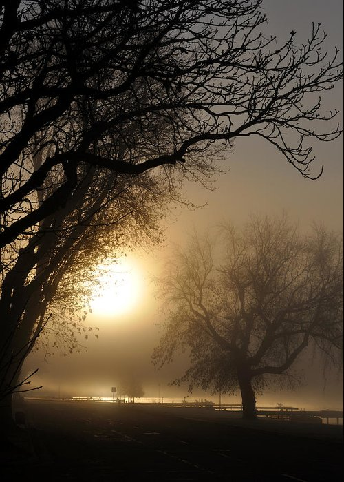 Foggy Greeting Card featuring the photograph Foggy Morn by Tim Nyberg