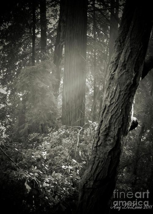 Fog Greeting Card featuring the photograph Foggy Morning In The Woods by Amy Delaine