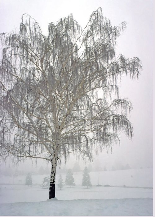 Nature Greeting Card featuring the photograph Foggy Morning Landscape 11 by Steve Ohlsen