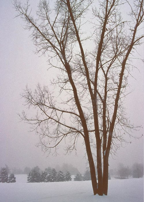 Nature Greeting Card featuring the photograph Foggy Morning Landscape 13 by Steve Ohlsen