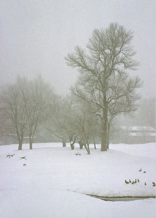 Fog Greeting Card featuring the photograph Foggy Morning Landscape 2 by Steve Ohlsen