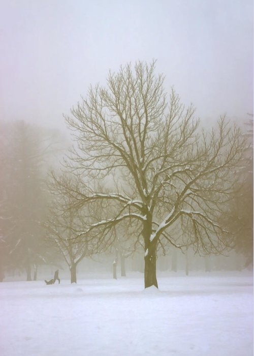 Nature Greeting Card featuring the photograph Foggy Morning Landscape 7 by Steve Ohlsen