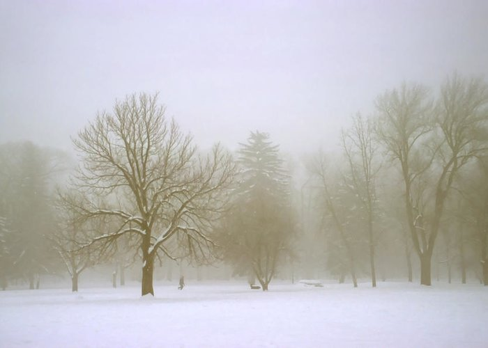 Nature Greeting Card featuring the photograph Foggy Morning Landscape 8 by Steve Ohlsen