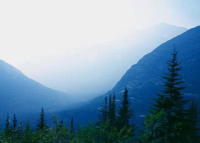 Alaska Foggy Valley Mountain Pine Trees Greeting Card featuring the photograph Foggy Valley by Jack G Brauer