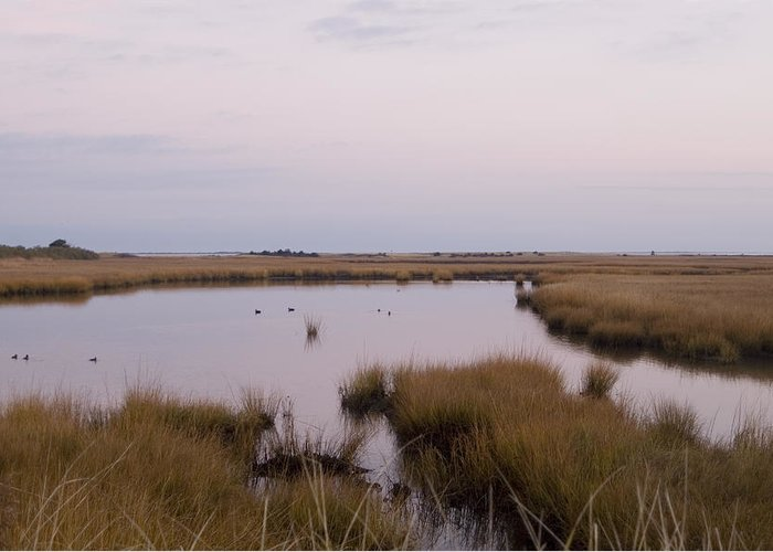 Nantucket Greeting Card featuring the photograph Folgers Marsh Nantucket by Henry Krauzyk