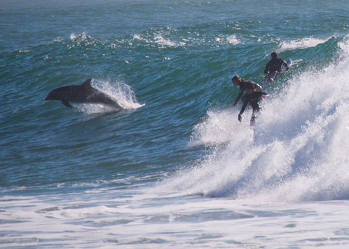 Dolphins Greeting Card featuring the photograph Follow Me by Peggy Zachariou