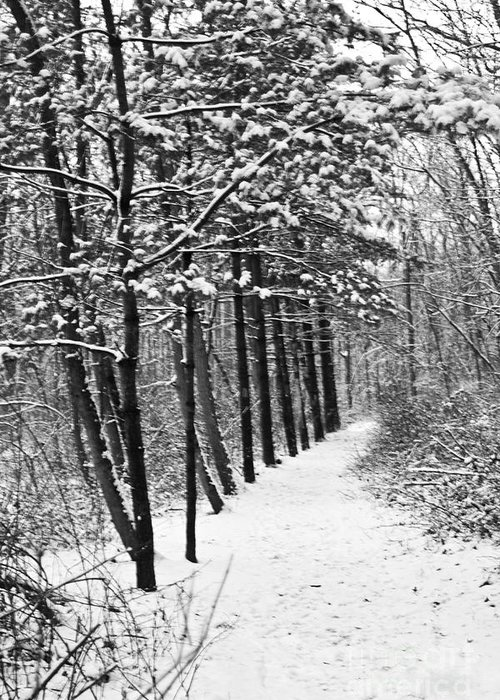 Nature Greeting Card featuring the photograph Follow The Snowy Trail by Robin Lynne Schwind