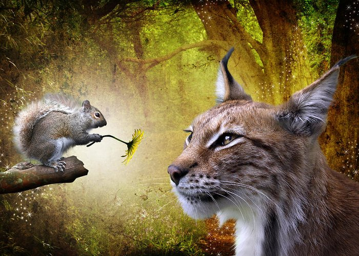 Canadian Lynx Greeting Cards