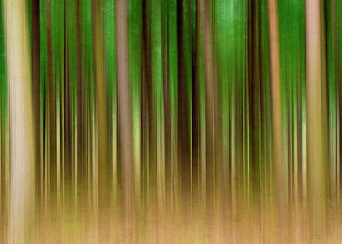 Forest Greeting Card featuring the photograph Forest Abstract04 by Svetlana Sewell