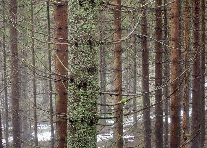 Mystical Greeting Card featuring the photograph Forest At Winter by Andre Goncalves