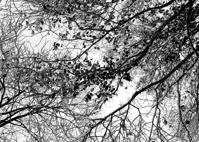 Spring Flowers Greeting Card featuring the photograph Forest Canopy Bw by Az Jackson
