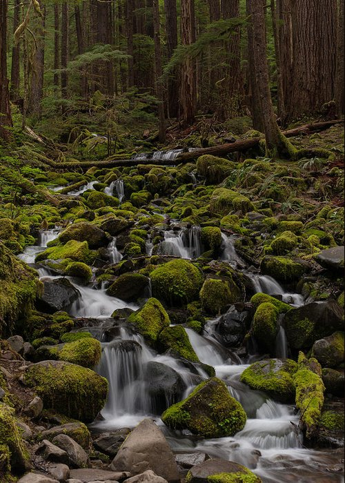 Olympic National Park Greeting Card featuring the photograph Forest Cathederal by Mike Reid