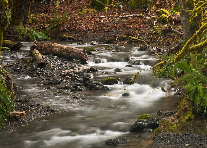 River Greeting Card featuring the photograph Forest Creek by Chad Davis