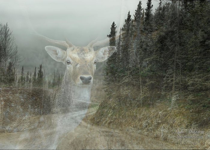 Deer Greeting Card featuring the photograph Forest Dweller by Dyle  Warren