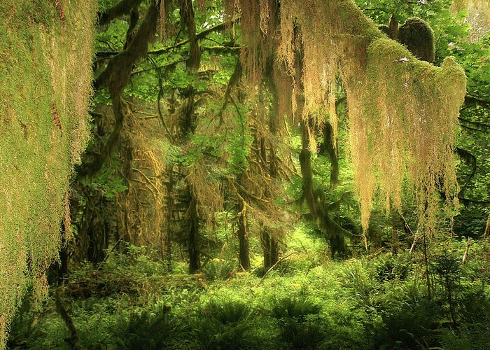Quinault Rain Forest Greeting Card featuring the photograph Forest Fantasy - Quinault - Gateway To Paradise On The Olympic Peninsula Wa by Christine Till