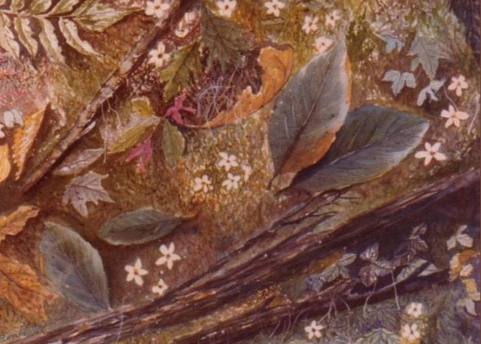 Leaves; Forest; Flowers Greeting Card featuring the painting Forest Floor by Ben Kiger