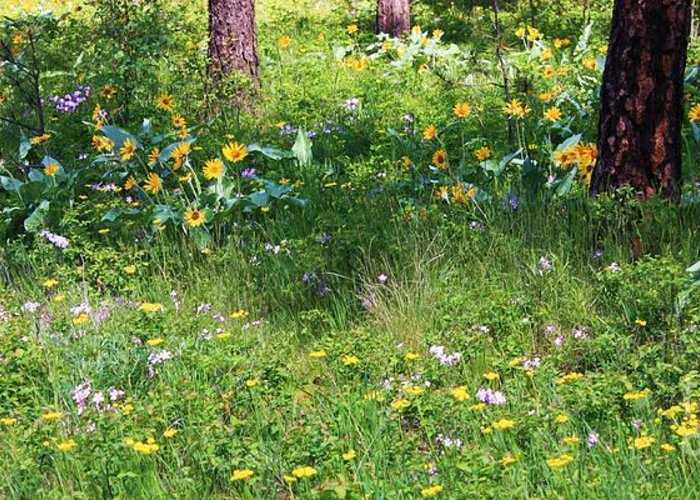 Flowers Greeting Card featuring the photograph Forest Flowers Landscape by Carol Groenen