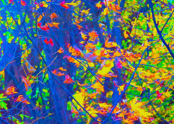 World's Most Colorful Forest Foliage Greeting Card featuring the photograph Forest Foliage Art by Ron Fleishman