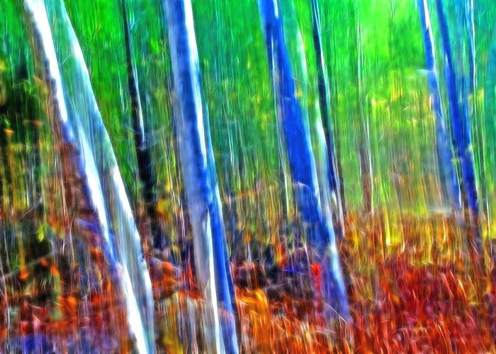 Forest Greeting Card featuring the photograph Forest Magic by Bill Morgenstern