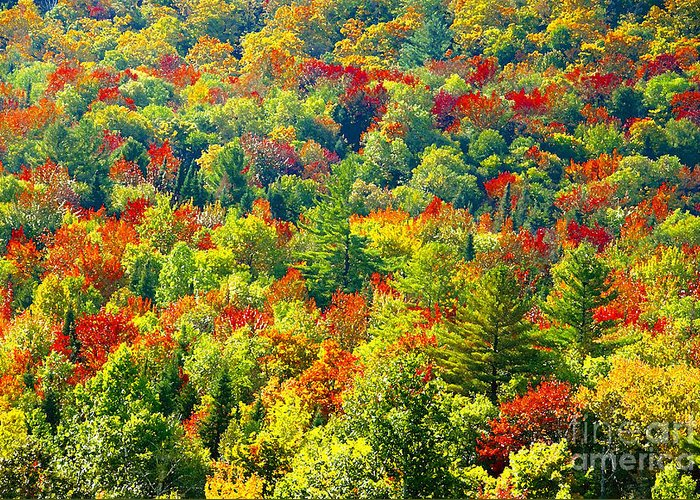 Forest Greeting Card featuring the photograph Forest Of Color by David Lee Thompson