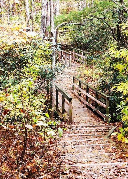 Forest Greeting Card featuring the photograph Forest Path by Cindy Gacha