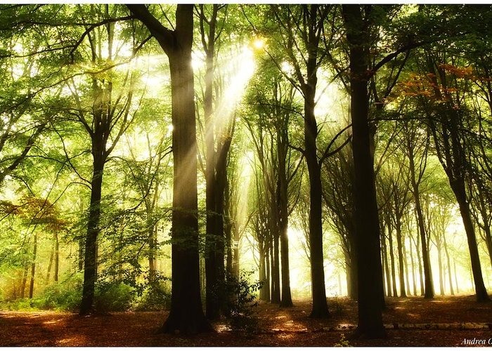 Autumn Greeting Card featuring the photograph Forest Rays by Andrea Otte