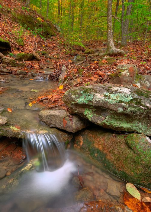 Landscape Greeting Card featuring the photograph Forest Stream by Ryan Heffron