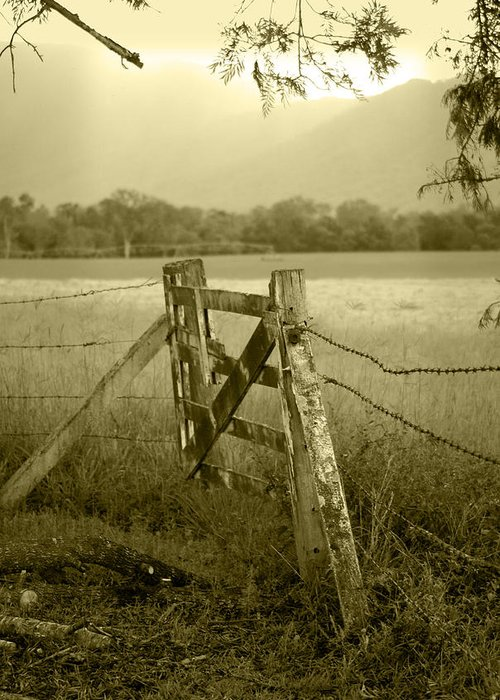 Gate Greeting Card featuring the photograph Forgotten Fields by Holly Kempe