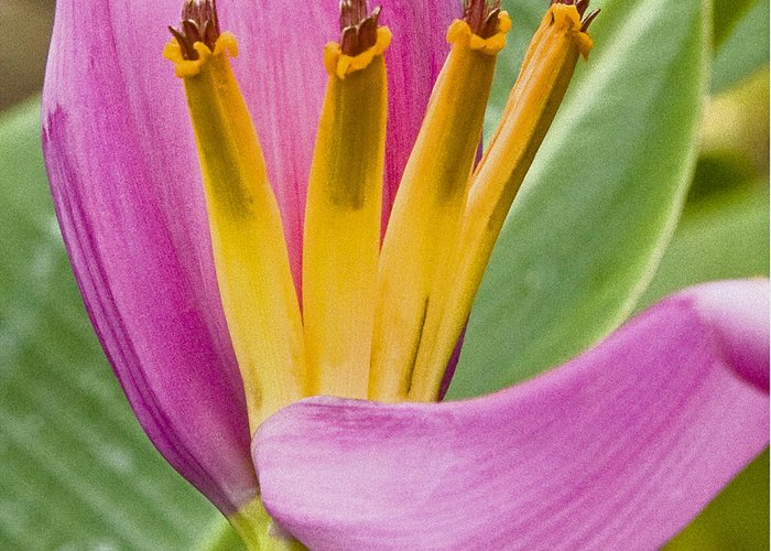 Natural Greeting Card featuring the photograph Form Color Texture Pattern Plants 1 by Charlie Osborn