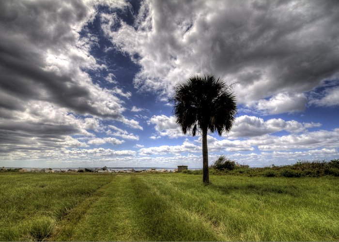 Fort Greeting Card featuring the photograph Fort Moultrie Palm by Dustin K Ryan