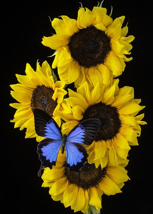 Vertical Greeting Card featuring the photograph Four Sunflowers And Blue Butterfly by Garry Gay