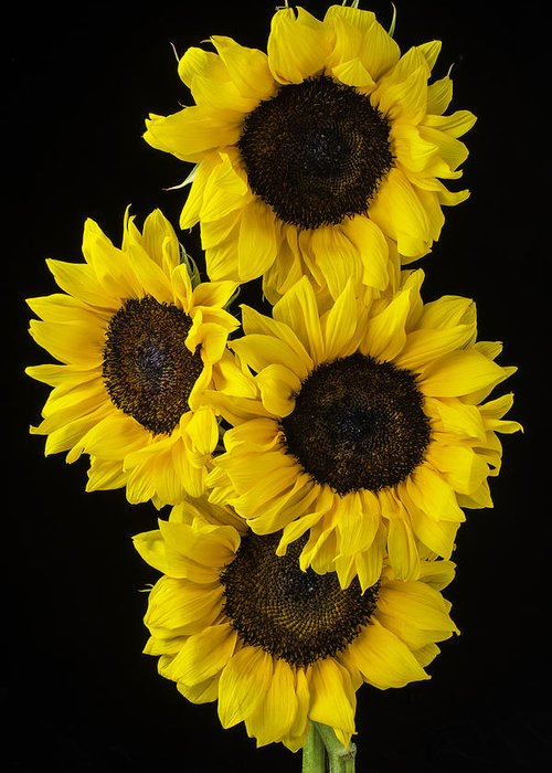 Vertical Greeting Card featuring the photograph Four Sunny Sunflowers by Garry Gay