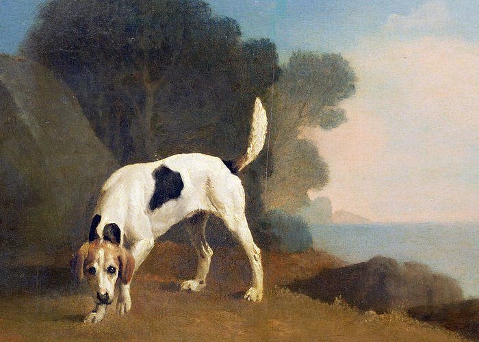 Xyc158003 Greeting Card featuring the photograph Foxhound On The Scent by George Stubbs