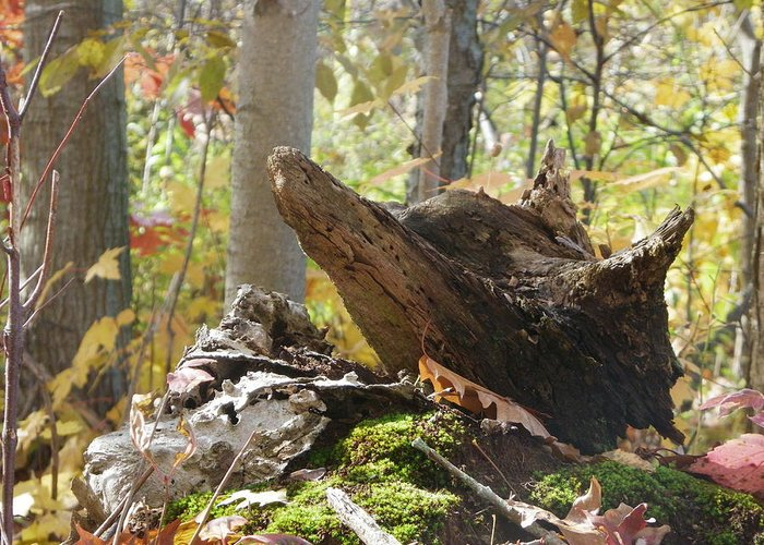 Nature Greeting Card featuring the photograph Foxy Stump by Peggy King