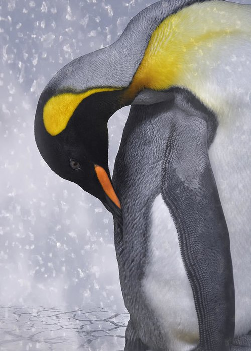 Emperor Penguin Greeting Cards