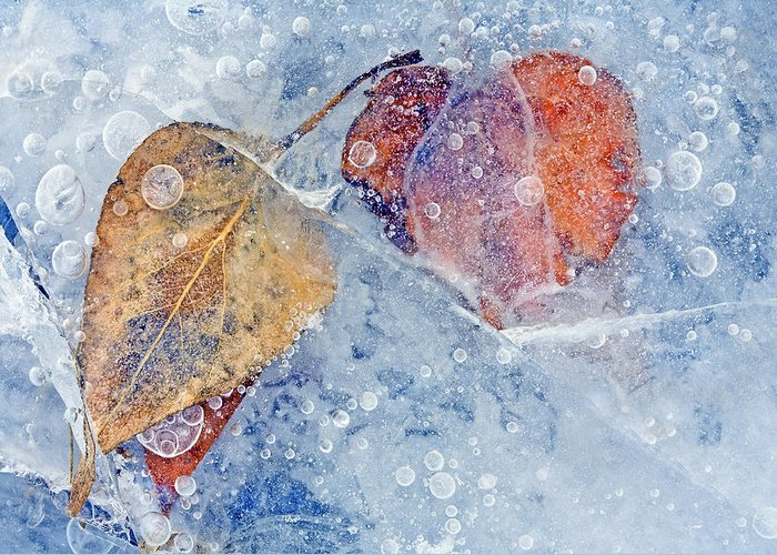 Ice Greeting Card featuring the photograph Fractured Seasons by Mike Dawson