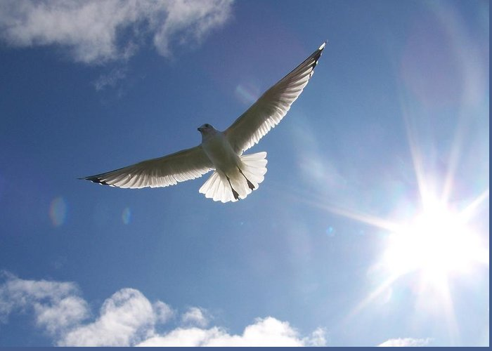 Gull Greeting Card featuring the photograph Freedom - Photograph by Jackie Mueller-Jones