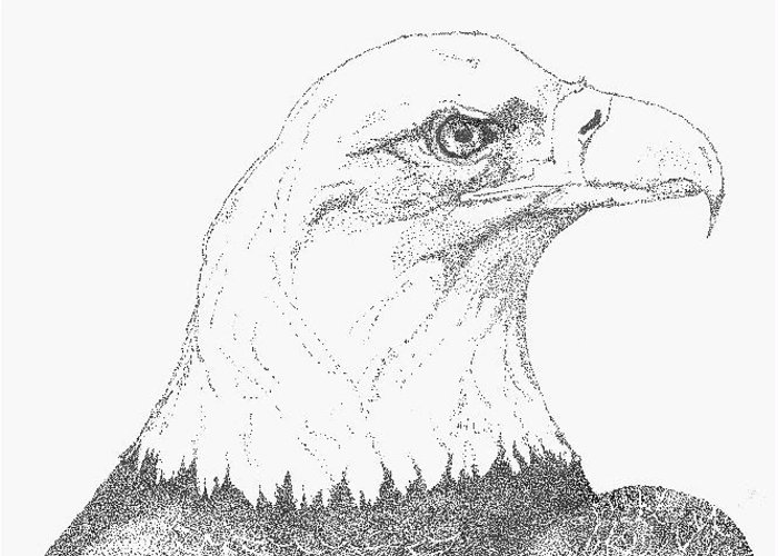 Eagle Greeting Card featuring the drawing Freedom by Debra Sandstrom