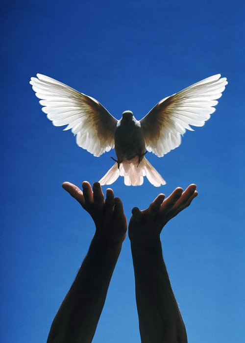 Potential; Creative; Creativity; Hands; Dove; Bird; Freedom; Release; Flight; Wing; Wings; Peace; Peaceful; Escape; Graceful; Feather; Feathers Greeting Card featuring the photograph Freedom by Gerard Fritz