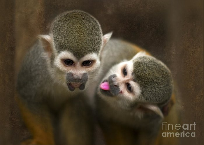 Monkeys Greeting Card featuring the photograph French Kiss by Angel Ciesniarska