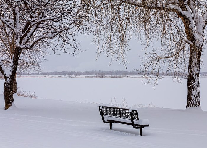 Snow Greeting Card featuring the photograph Fresh Fallen Snow by James BO Insogna