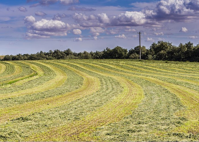 Summer Greeting Card featuring the photograph Freshly Mown Hay by John Trax