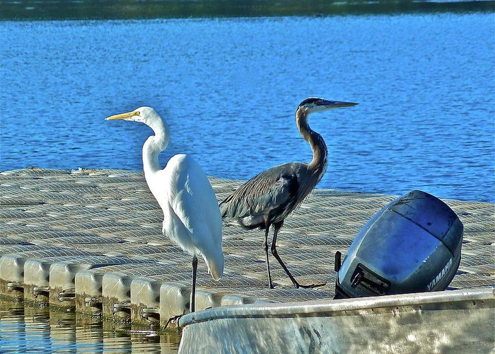 Birds Greeting Card featuring the photograph Friend Or Foe by Diana Hatcher