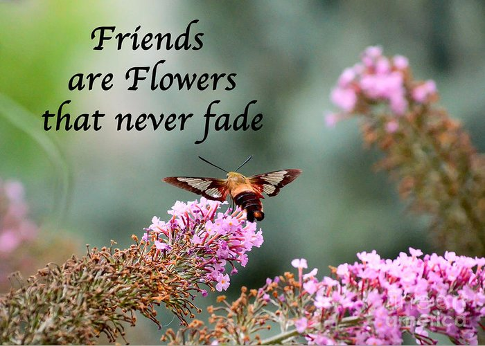 Friends Greeting Card featuring the photograph Friends Are Flowers That Never Fade by Kerri Farley