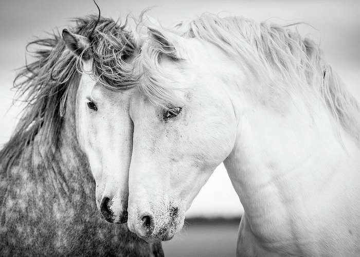 White Horse Photographs Greeting Cards