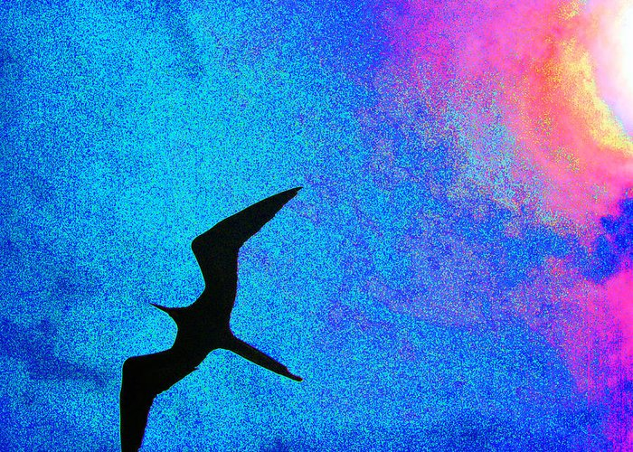 Frigate Greeting Card featuring the photograph Frigate Bird by Ladonna Idell